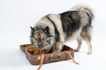 Hund Koffer Urlaub