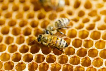 Foto op Canvas Bee Beekeeping