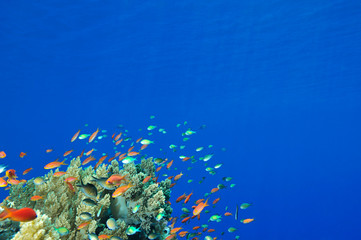 Colorful reef with blue ocean space for your text