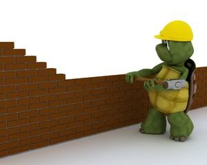 tortoise building contractor
