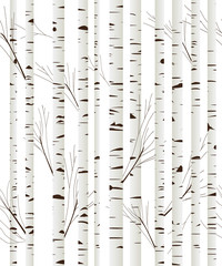 Birchwood background