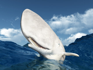 Weißer Wal