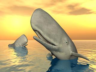 Wale mit Sonnenuntergang