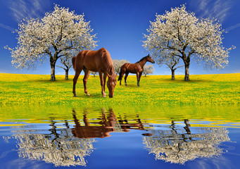 Blooming cherry tree with horses