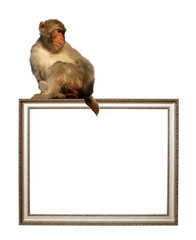 picture frame with sitting monkey