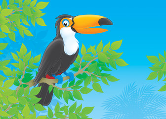 Toucan in a tropical forest
