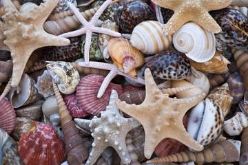 Coquillages et étoiles de mer séchées