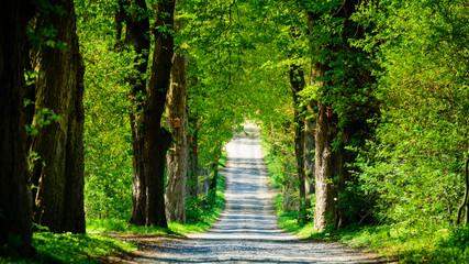 Landstraße mit Allee 4