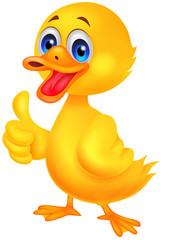 Duck cartoon thumb up