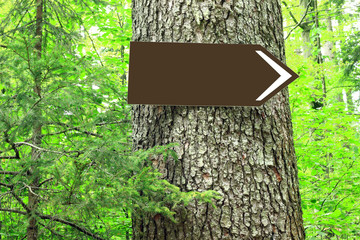 Blank direction sign on tree