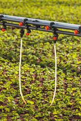 Sprinkler system inside a greenhouse irrigating plants