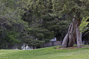 A white retro bicycle standing in a beautiful park