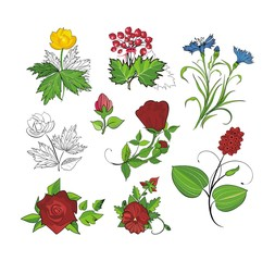 vector design set: flowers