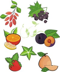 vector design set: fruits and berries