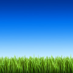 Grass on the background of blue sky