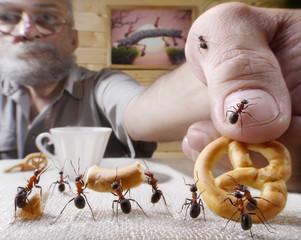 human rewards ants with bake