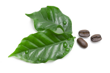 Green coffee leaf and coffee bean on white background