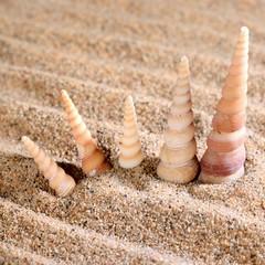 sea shells on the sandy beach