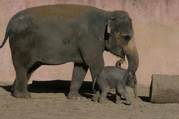 Elefantenbaby mit seiner Muttter