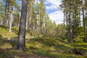 Forest scene, finnmaken, dalarna, Sweden