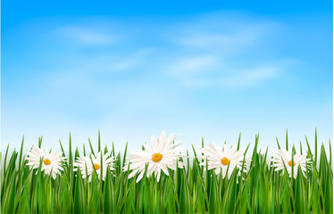 Wall Mural - Nature background with green grass and flowers and blue sky. Vec
