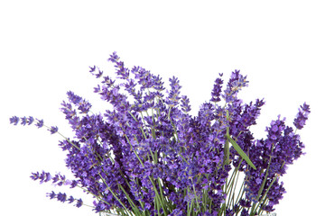 Bouquet of picked lavende