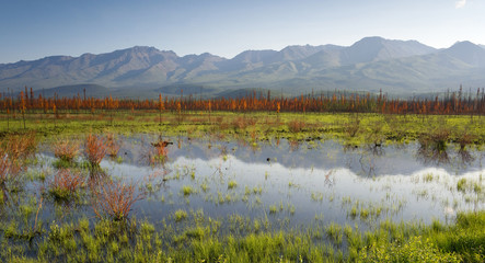 Scenic Marsh Water Panoramic Mountain Landscape Outback Alaska