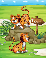Tuinposter Vlinders Two tigers near the wooden arrowboard