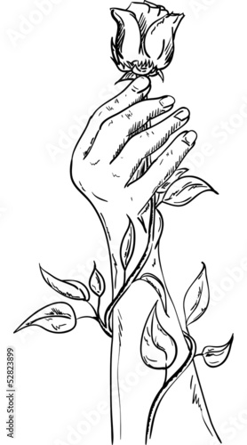 Hand holding a rose stock image and royalty free vector for Hand holding a rose drawing