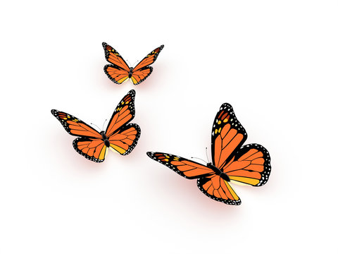 Butterfly orange render isolated