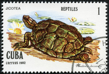 stamp printed in Cuba shows Pseudemys decussata
