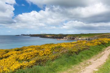 Wall Mural - Wales Coast Path Caerfai bay to St Non`s bay