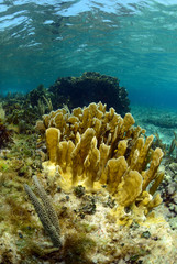Wall Mural - Underwater aquatic marine life and coral