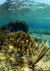 Wall Mural - Natural underwater seascape with gorgonian