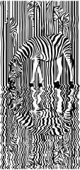 Zebra with reflection