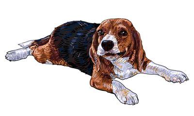 Playing beagle