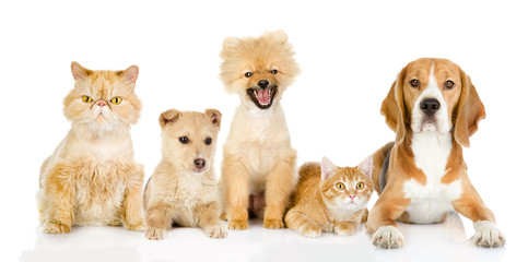 Group of cats and dogs in front. looking at camera. isolated on