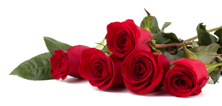 Beautiful red roses isolated on white background