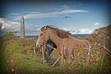 couple of grazing Irish horses and ancient round tower