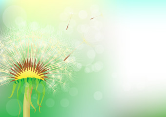 dandelion abstract background