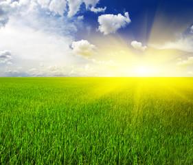 Blue sky clean grassland