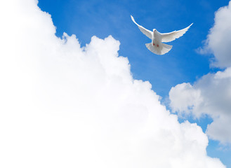 Foto En Lienzo - White dove flying in the sky. Template with a text field.