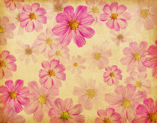 vintage paper textures with beautiful pink flowers. cosmea.
