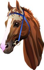 head redhead riding horse