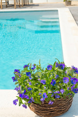 swimming pool and flower
