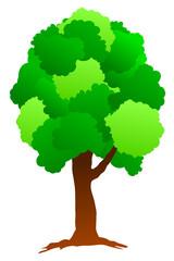 Fresh Green Tree