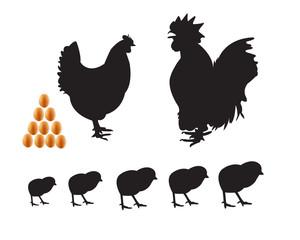 bantam chicken chicks eggs