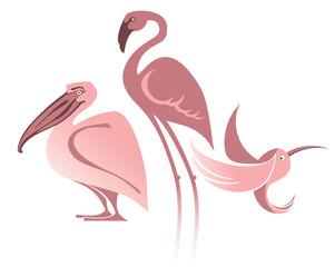 Exotic birds.