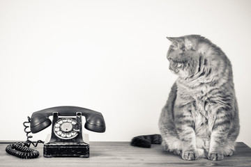 Vintage telephone and big cat on table sepia photo Wall mural