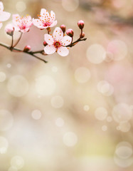 Fototapeta Plum flower macro shot with bokeh background